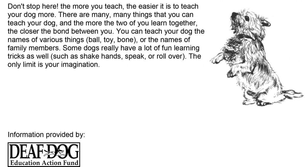 Training-for-Deaf-Dogs-9
