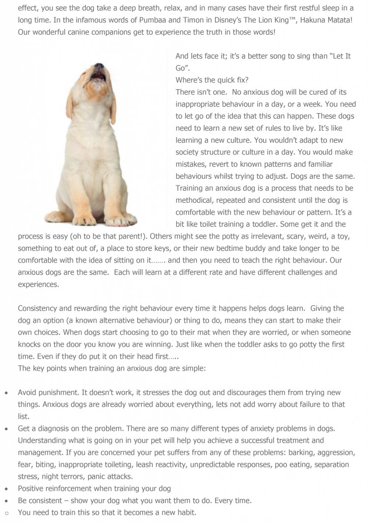 Why-would-we-use-punishment-in-training-a-dog-with-anxiety-4
